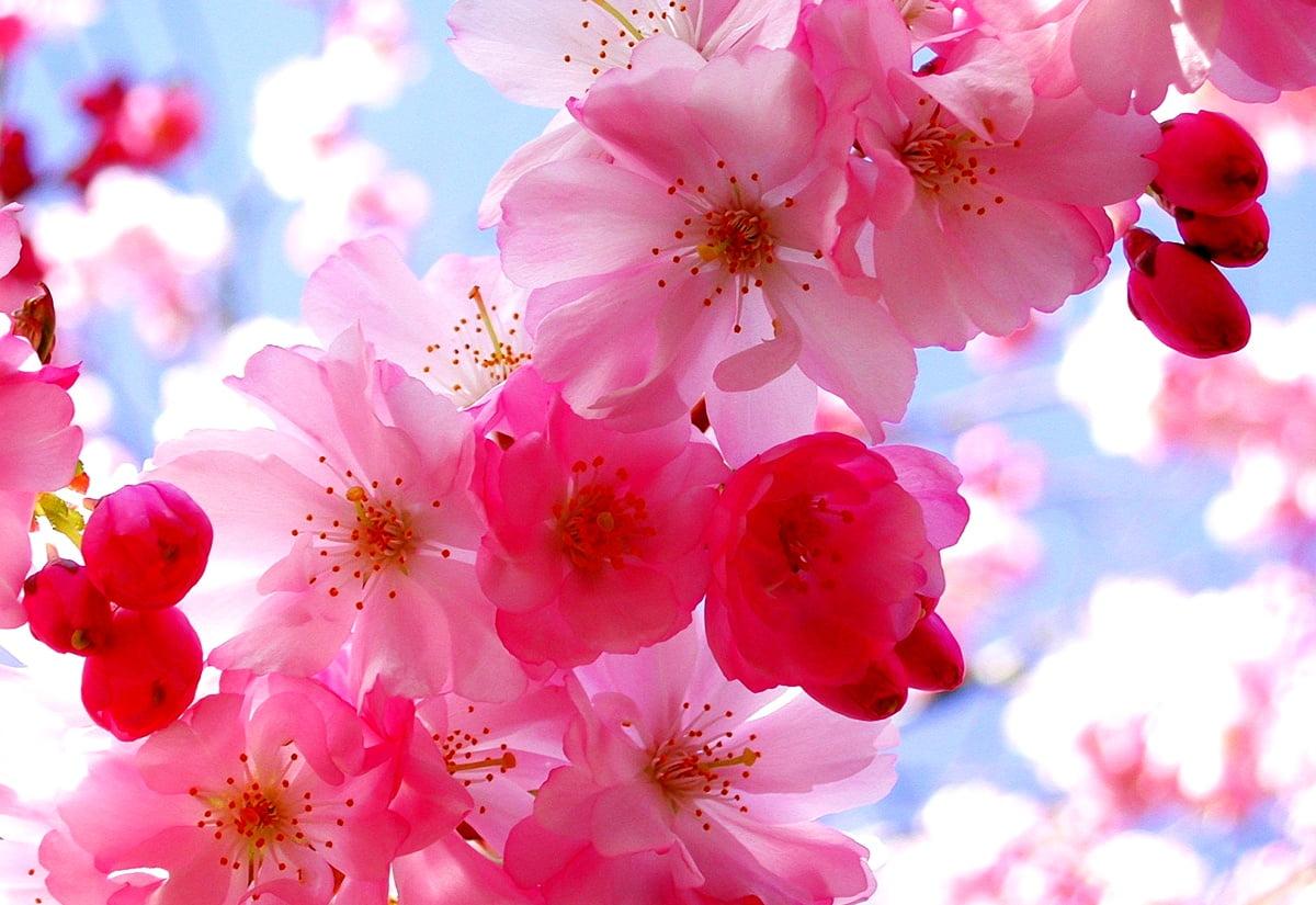 roze bloem op plant